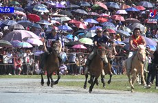 Efforts made to preserve Bac Ha horse racing festival