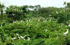 Bird sanctuary stands out in Ca Mau city