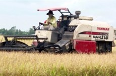 Vietnam sees bright prospects for rice exports