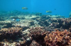 Hon Yen coral reefs in need of protection