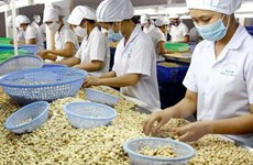 Cashew nut exports to China surge