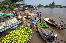 Mekong Delta, southern islands are new domestic tourism hotspots