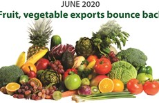 Fruit, vegetable exports bounce back