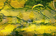 Mu Cang Chai terraced fields in ripen season