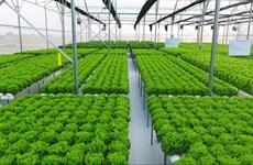 Da Nang develops high-tech agriculture
