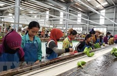 Agricultural projects creating stable employment in Cambodia