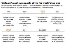 Vietnam's cashew exports strives for world's top one