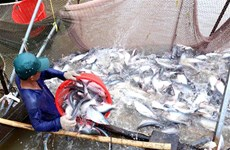 Mekong Delta uses high-tech to raise tra fish