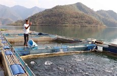 Fish cage farming in Lai Chau proves effective