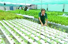 Agriculture sector expands by 2.02 pct in nine months
