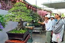 Vietnam hosts Asia-Pacific Bonsai-Suiseki Festival