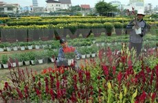 Gardens prepare for Lunar New Year