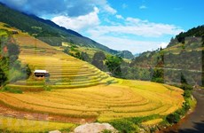 Coming to Mu Cang Chai terraced fields in rice ripen season