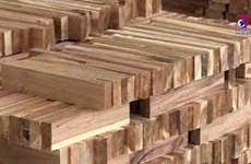 Wood industry regains growth momentum