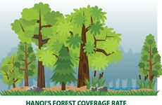 Hanoi's forest coverage rate reaches 5.67 percent