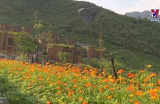 Ha Giang tourism struggles to adapt to COVID-19