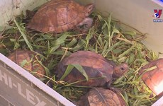 Nearly 480 wild animals rescued in H1