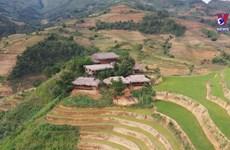 Mu Cang Chai tourism hit hard by pandemic