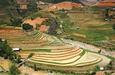 Festival highlights Mu Cang Chai terraced fields' beauty
