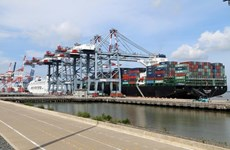 Container stevedoring service costs should increase: Insiders