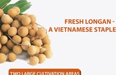 Fresh longan - A Vietnamese staple