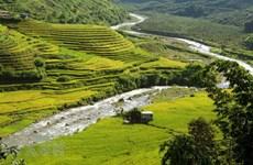 Golden terraces cast a spell over Si Lo Lau border area