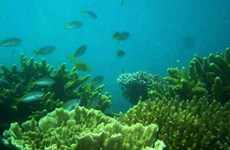 200ha of bleached Con Dao corals recover naturally