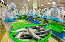 China likely becomes Vietnam's biggest tra fish market