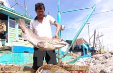 Agro-forestry-fishery exports reach 29.1 billion USD so far