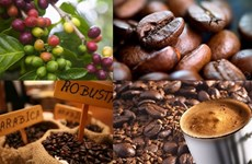 December 10 designated Vietnam Coffee Day