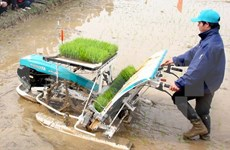 Vietnam seeks more int'l help for sustainable agriculture