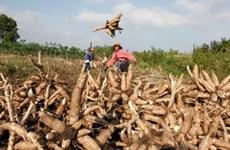 RoK company to build cassava processing factory in Cambodia