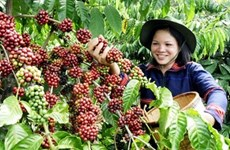 Changes brew in coffee industry