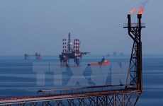 Vietsovpetro taps 5.04 million tonnes of crude oil this year