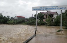 Binh Dinh distributes rice to natural disaster victims