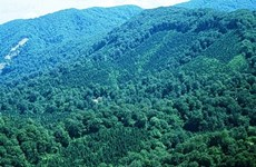 Forest coverage to rise to 47.25 percent in 2017