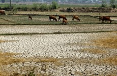 New index for Vietnam climate resilience