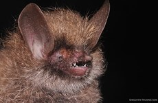 More new species discovered in Vietnam