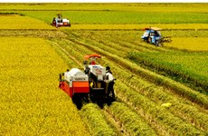 Cuba boosts cooperation with Mekong Delta