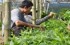 Vietnam, Israel develop supply chain of farm produce