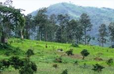 Central Highlands provinces rearrange activities of plantations