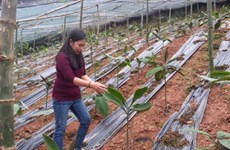 Herbal plant preservation yields large profit