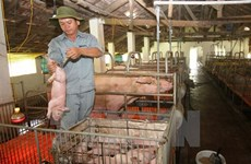 Use of cysteamine banned in Vietnam