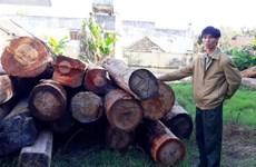 Timber smuggling worries Kon Tum