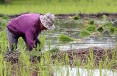 Thailand promotes crop diversification