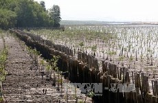 Sea dyke erosion worsens in Kien Giang