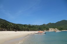 Cham Island tries to rescue green turtles