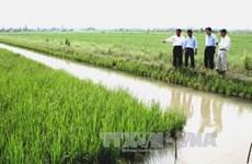 Rice/shrimp rotation a hit in Bac Lieu