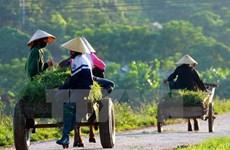 Thua Thien – Hue develops rural areas