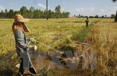 USAID, IFAD assist Cambodian with agricultural development